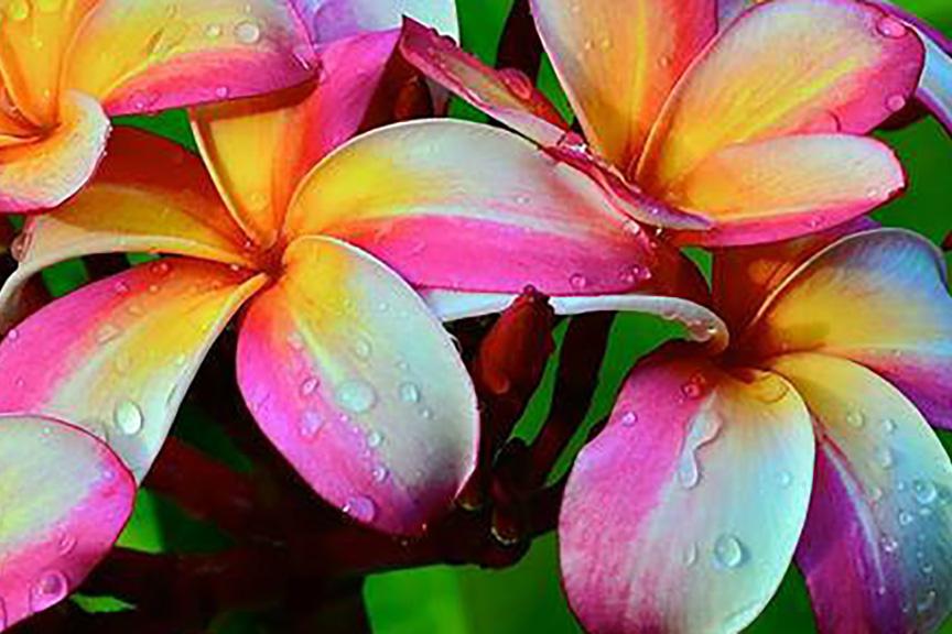 maui flowers retreat